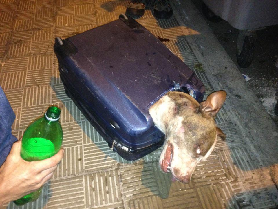 Spakował psa do walizki i wyrzucił do śmieci. Jeden z przechodniów dostrzegł wystającą głowę