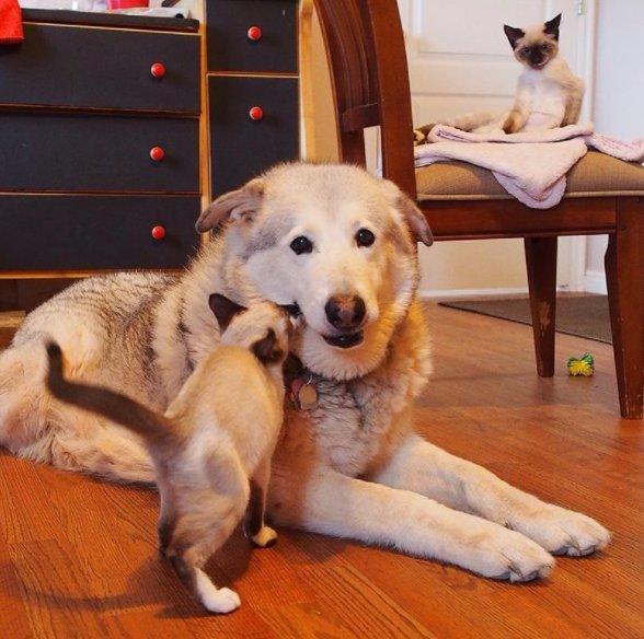Suczka tęskniła za kocim przyjacielem, który odszedł. Właściciele sprawili jej ogromną niespodziankę