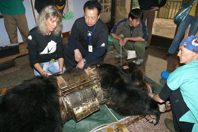 Celowo spuszczali żółć z biednej niedźwiedzicy. Przez lata znosiła ogromne męki