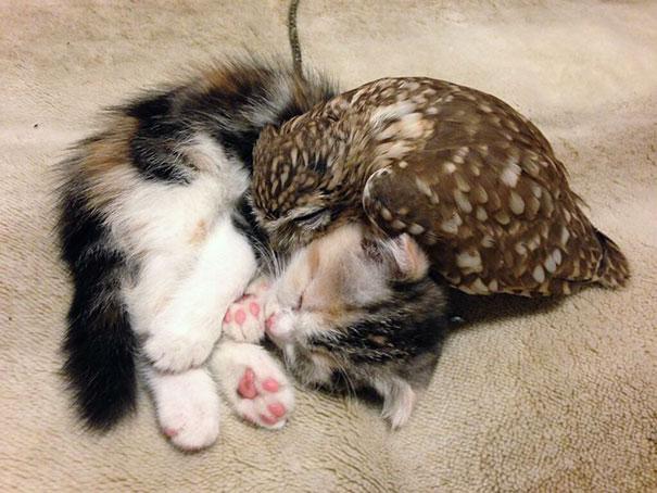 Choć pochodzą z dwóch zupełnie różnych gatunków, połączyła ich przyjaźń. Stali się nierozłączni