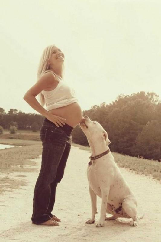 20 zdjęć psów, które w słodki sposób oczekują narodzin nowego członka rodziny