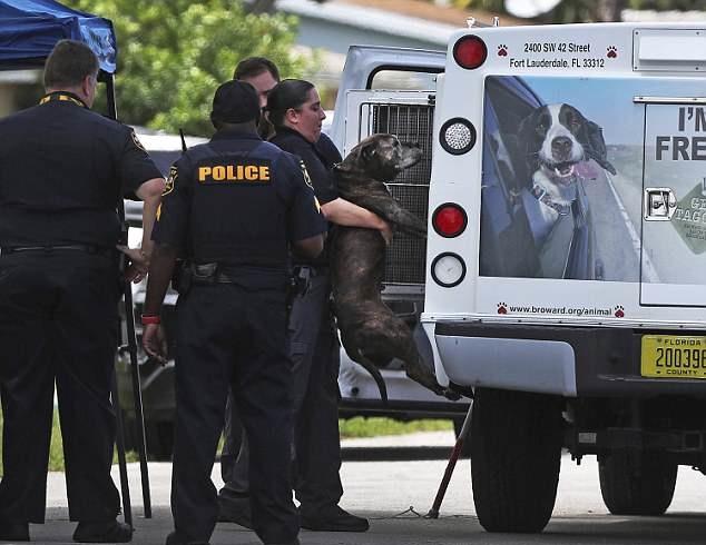 Pit bull rozszarpał 9-miesięczną dziewczynkę, kiedy spała. Babcia nie zdołała jej obronić