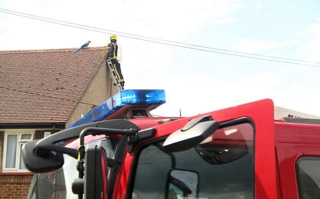 Papuga 3 dni siedziała na dachu. Gdy strażak chciał ją uratować, usłyszał niemiłe słowo