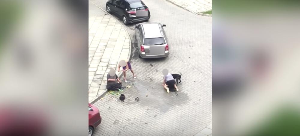 Rozwścieczony pitbull atakuje owczarka i jego właścicielkę. Zwierzę umiera na miejscu
