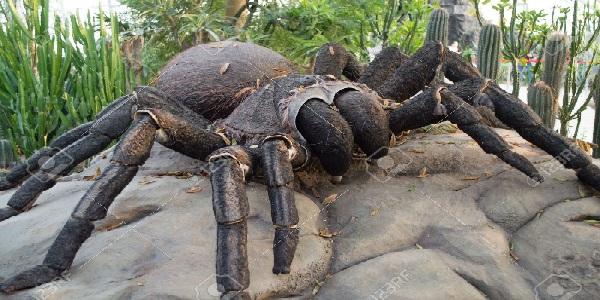 Ta piękna dziewczyna ze smakiem zjada gigantycznego pająka! Wcześniej sama go upolowała