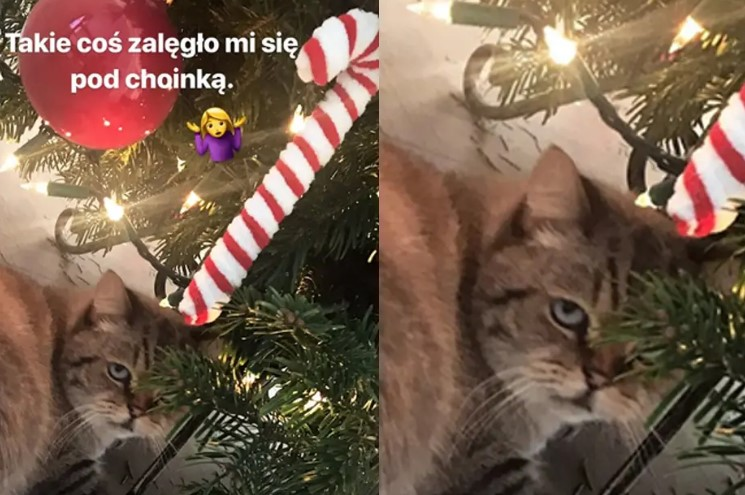 Jak wyglądają Święta polskich gwiazd? One z chęcią dzielą się tym w sieci z fanami