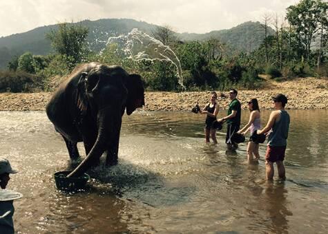 W wodzie widać słonia... nad słoniem!