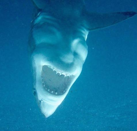 Człowiek na ciele rekina. Niebywałe!