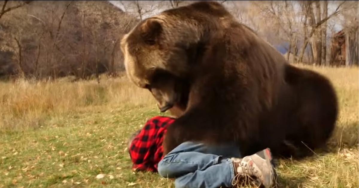 jak przetrwać atak niedźwiedzia