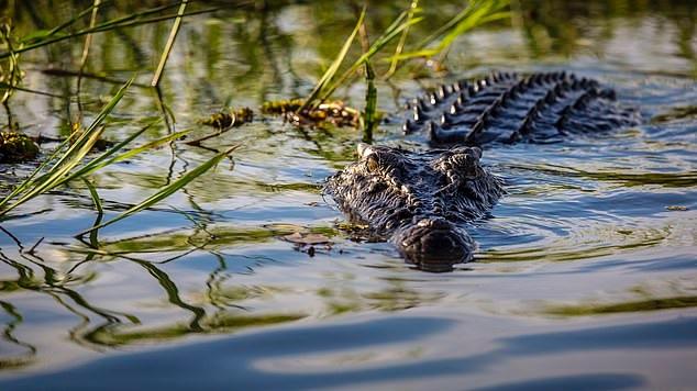 10-latek został zabity przez krokodyla