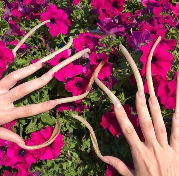 rekordowe paznokcie