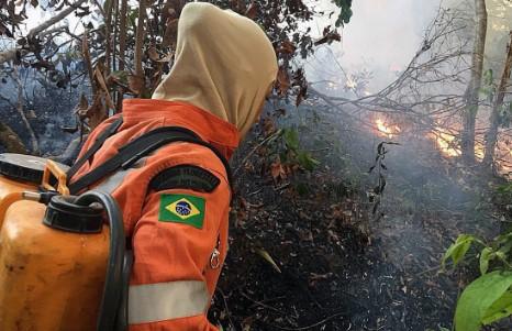 Pali się las w Amazonii