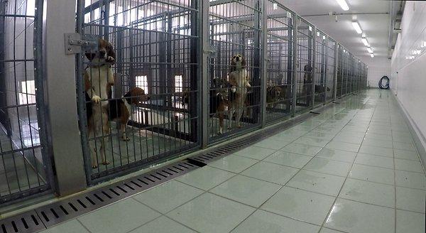 psy w klatkach