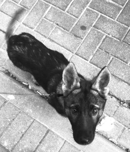 Pies skradziony z auta na Starym Mieście