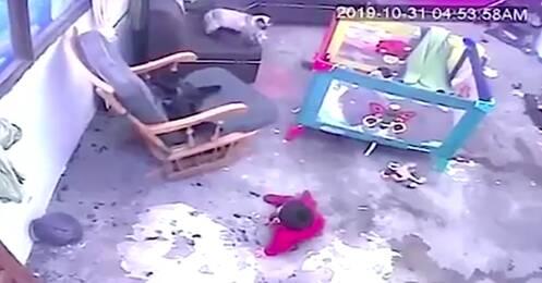 kot uratował rocznego chłopczyka