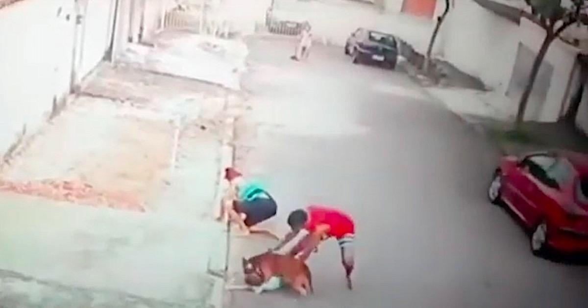 Pitbull zaatakował 4-latka