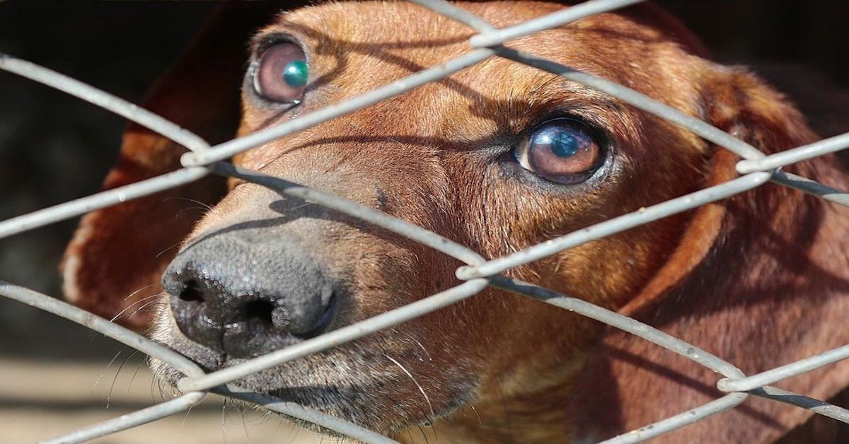 za porzucenie zwierzęcia kara więzienia