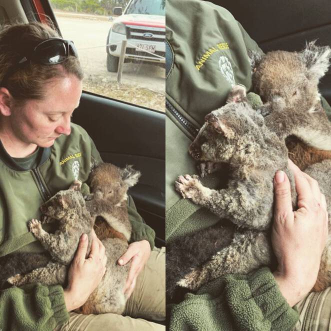 Kangur dziękuje za ratunek