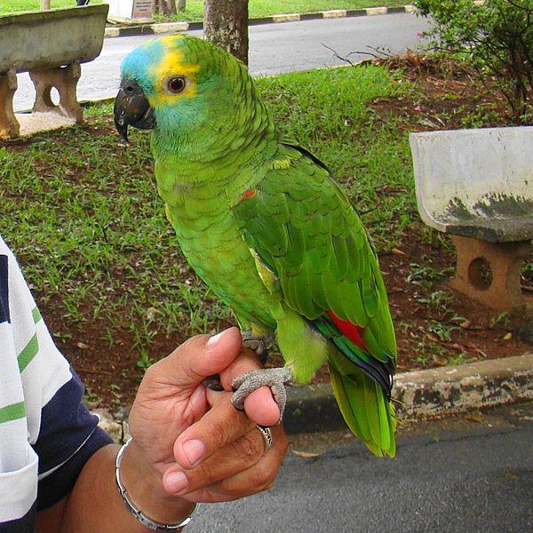 Papuga krzyczała o pomoc