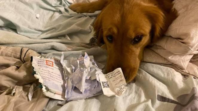 Pies uratował właściciela