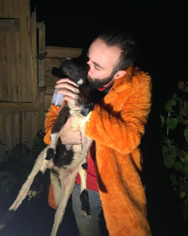 Taniec z bezpańskim psem