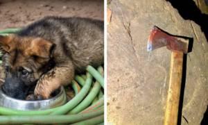 Właściciel zarąbał psa siekierą