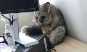 opos w biurze