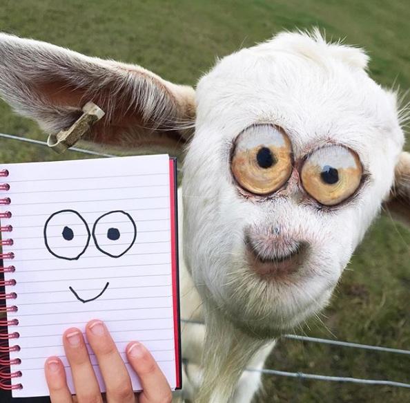 zabawne fotomontaże dziecięcych rysunków 22