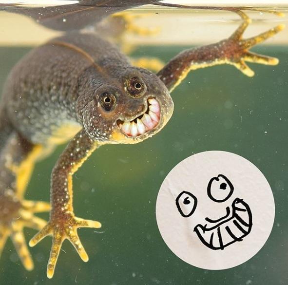 zabawne fotomontaże dziecięcych rysunków 5