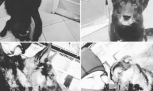 Żałoba w policji po śmierci psów