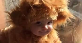 11-miesieczne dziecko bawilo sie z lwem