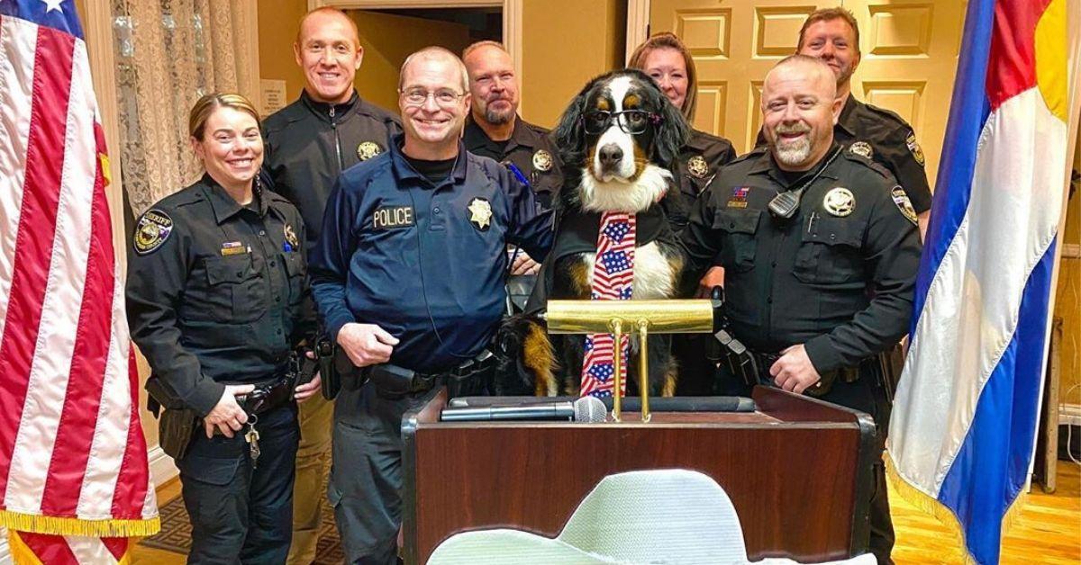 Pies został burmistrzem