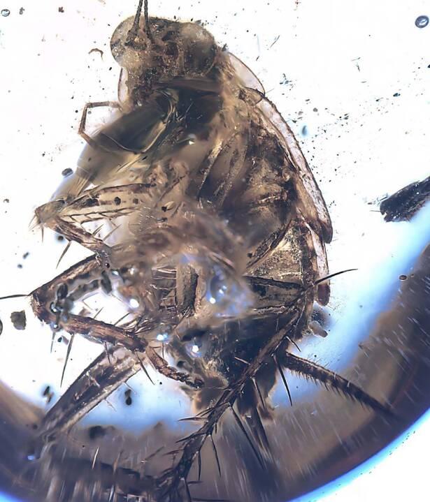 Prehistoryczny wirus w bursztynie