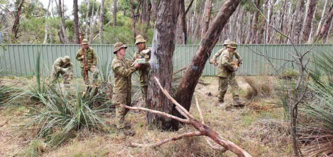 Australijscy żołnierze i koale