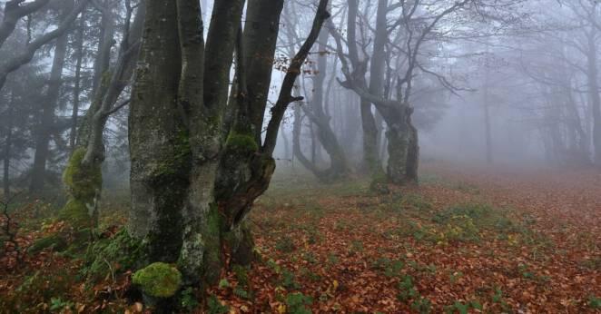 Leśniczy znalazł zwłoki