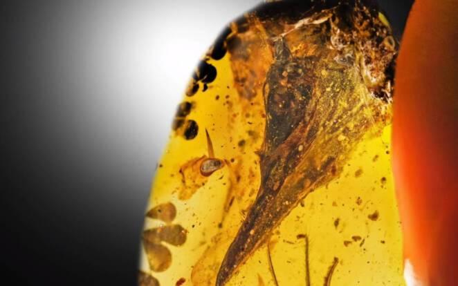 Najmniejszy dinozaur w bursztynie