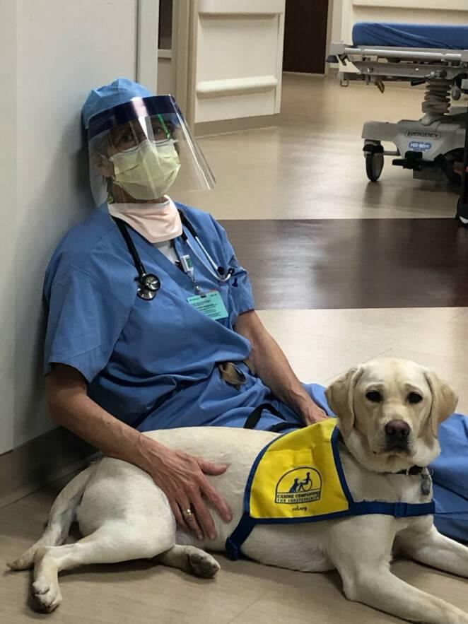 Psi terapeuta pomaga lekarzom