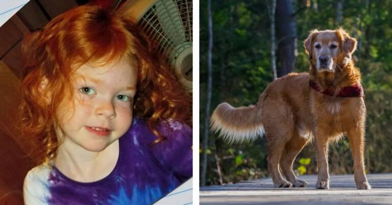 Suczka uratowała 4-letnią dziewczynkę