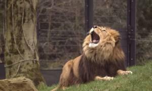 Zwłoki nastolatka w zoo
