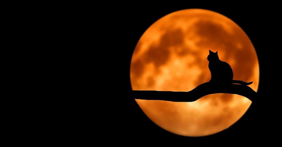 pełnia robaczego księżyca