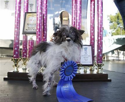 Najbrzydszy pies świata rasa