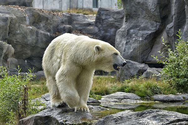 Niemieckie ZOO planuje zabicie zwierząt