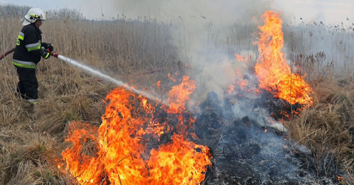Pożar w Biebrzańskim Parku Narodowym 0