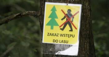 lasy zostaną otwarte