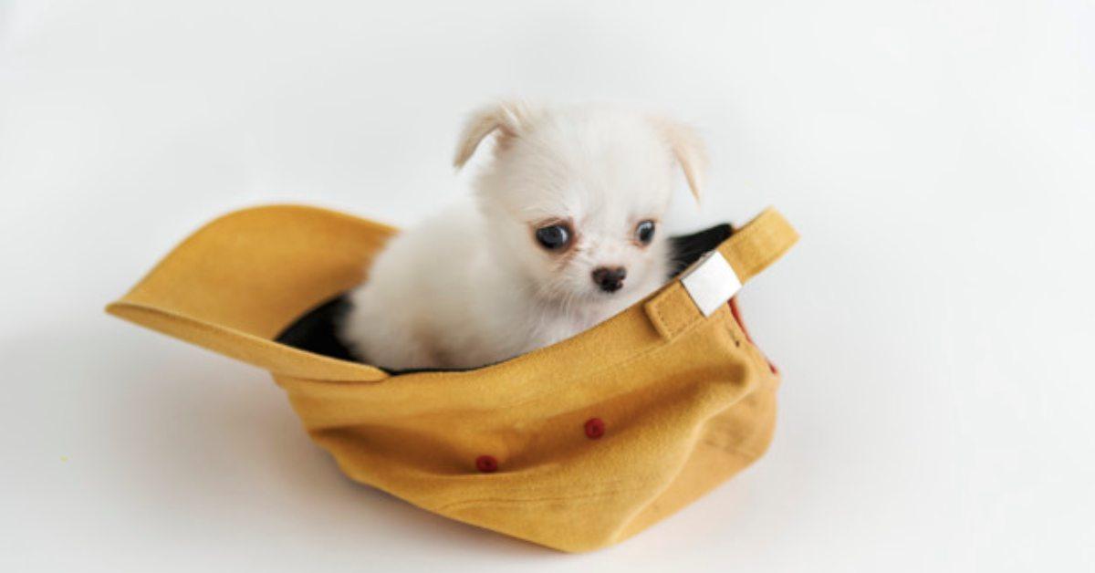 psy miniaturki