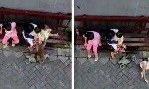 Małpa próbowała porwać dziecko! Nietypowe nagranie z Indonezji podbija sieć