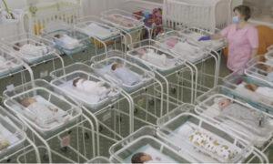 Setki zamówionych noworodków czekają na odbiór. Nie ma co z nimi zrobić