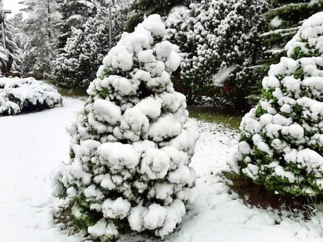 W Polsce spadł śnieg