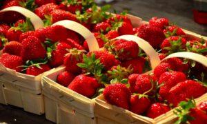 Kradzieże truskawek na polach. Nowy problem rolników spowodowany wysokimi cenami