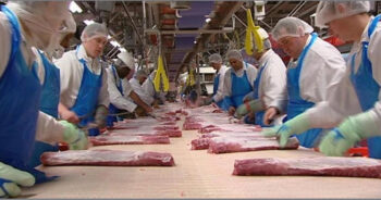 masowe zakażenie koronawirusem w fabryce mięsa